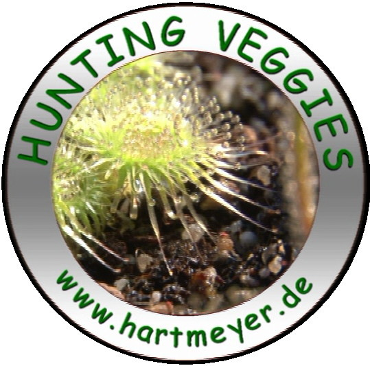 Hunting Veggies Logo 2012