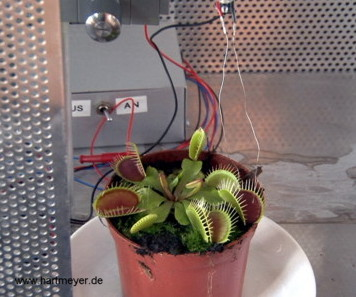 Dionaea muscipula Aktionspotenzial Messung